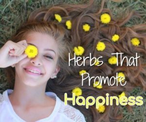 Happy Herbs
